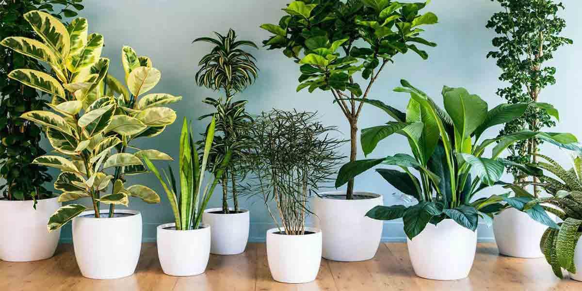 آب مناسب برای رشد گیاهان آپارتمانی